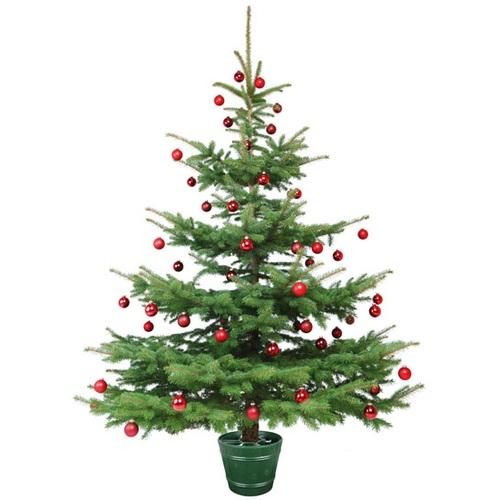 ALDOTRADE stojan na vánoční stromek Planet 2 zelený