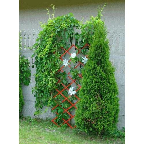ALDOTRADE Skládací mřížka na popínavé rostliny Pergola